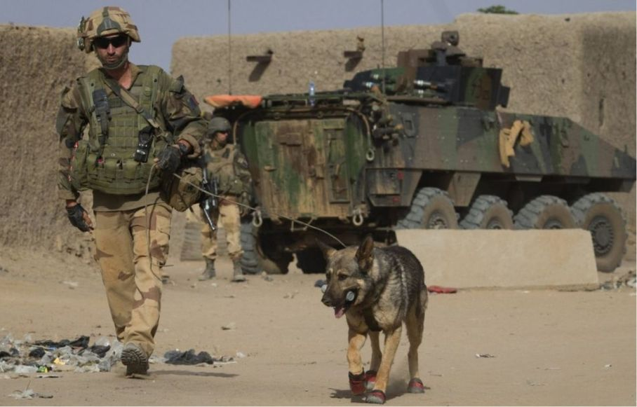 French Special Forces With Military Dog