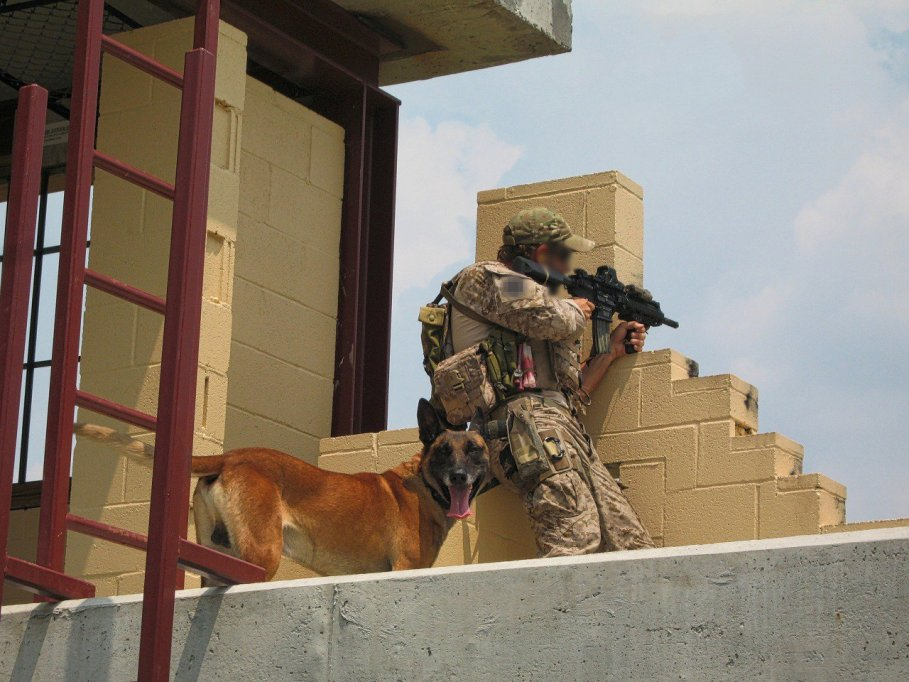 Military dogs are fiercely loyal to there handlers.