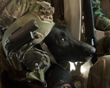 Photo: US Marine Corps Sgt. Pete Thibodeau
