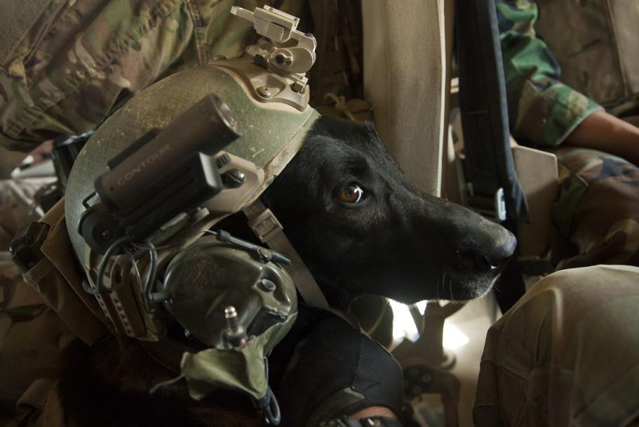 10 Dogs of War In Special Operations – Special Forces News